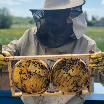 BeeSultan